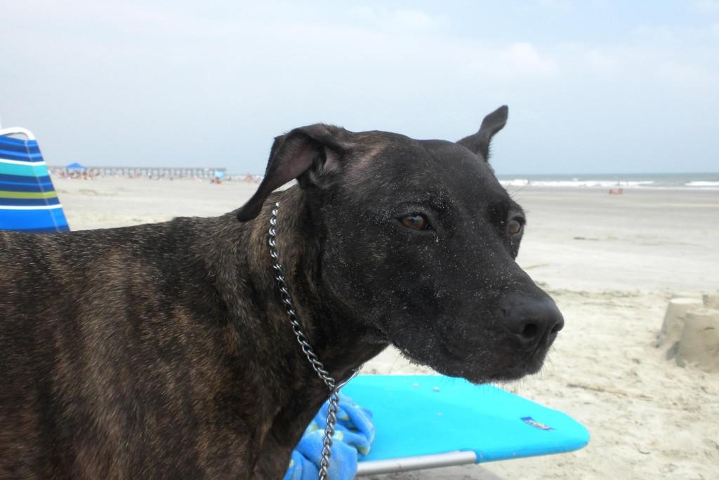 sadie-beach